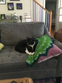 Cat and a shawl